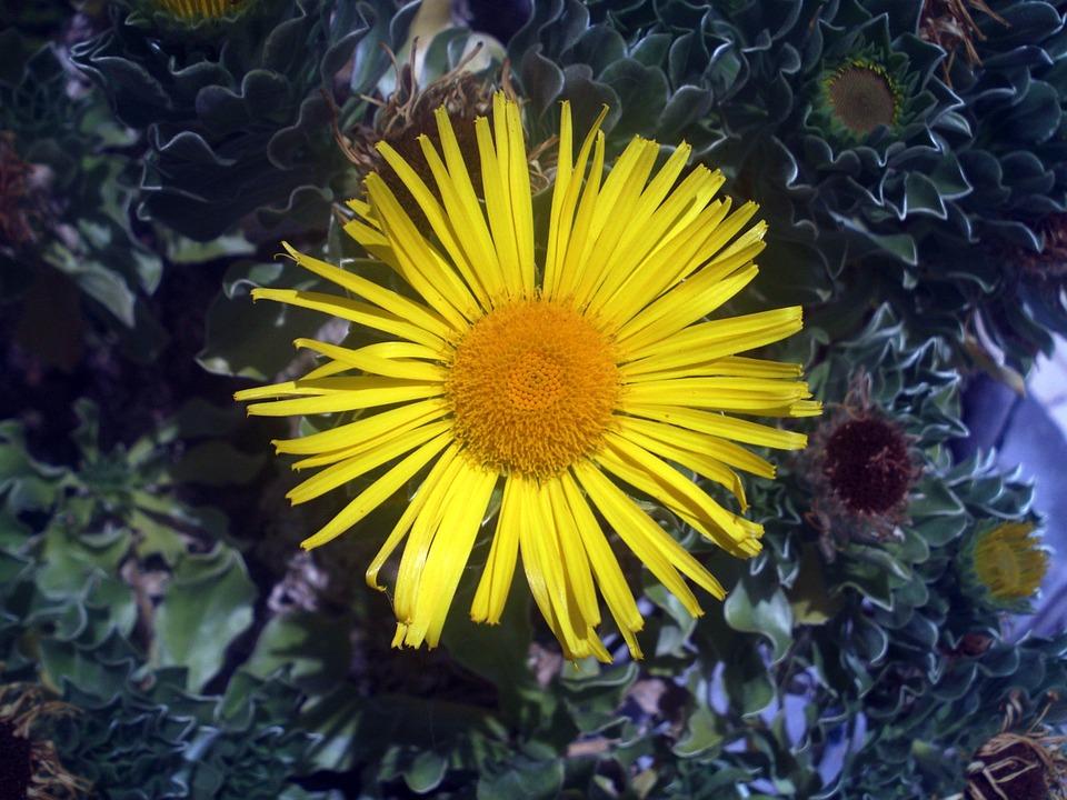 Flower, Yellow, Sun, Nature, Yellow Flower, Flowering