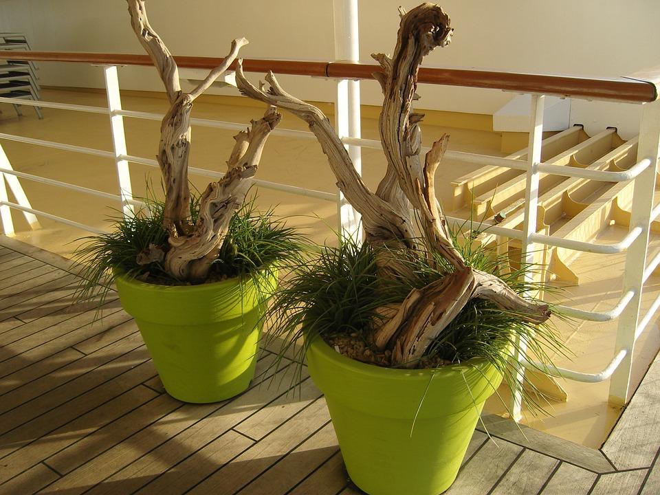 Flowerpot, Green, Sun, Mood, Grass, Root