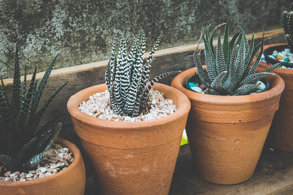 Flowerpots, Nature, Pots, Succulent