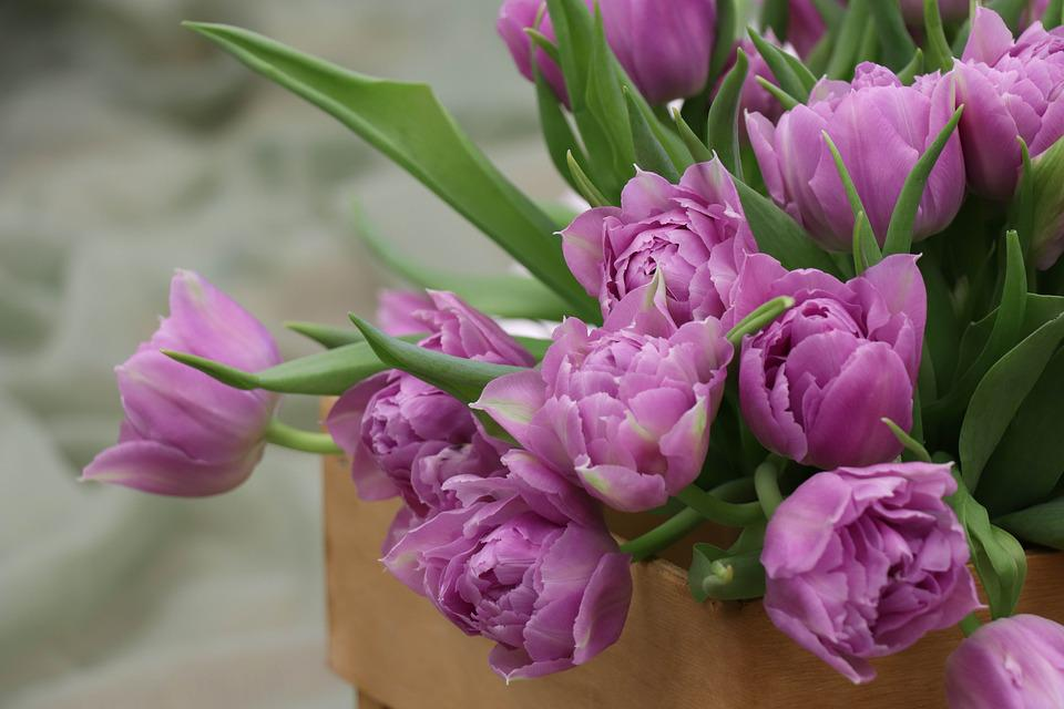 Tulips, A Bouquet Of Tulips, Tulip, Flowers, Bouquet