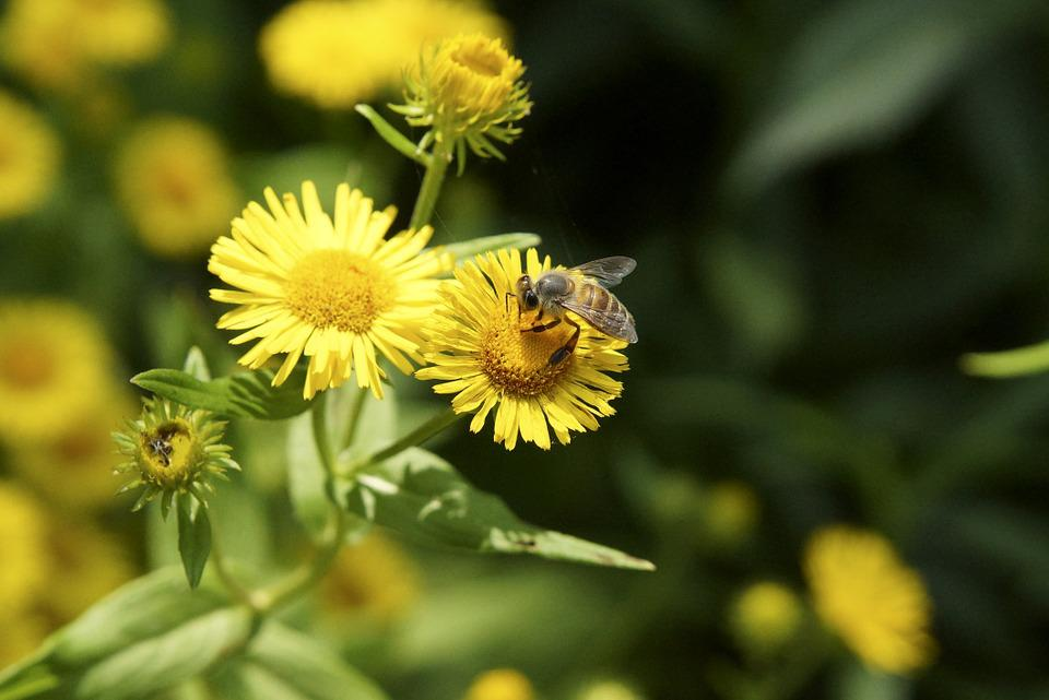 Free photo flowers and bees bee nature flowers spring yellow max pixel flowers nature bee yellow spring flowers and bees mightylinksfo