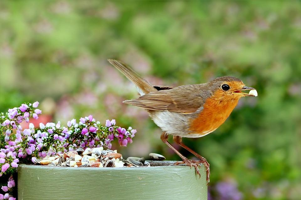 Bird, Animal, Flowers, Animal World, Songbird, Robin