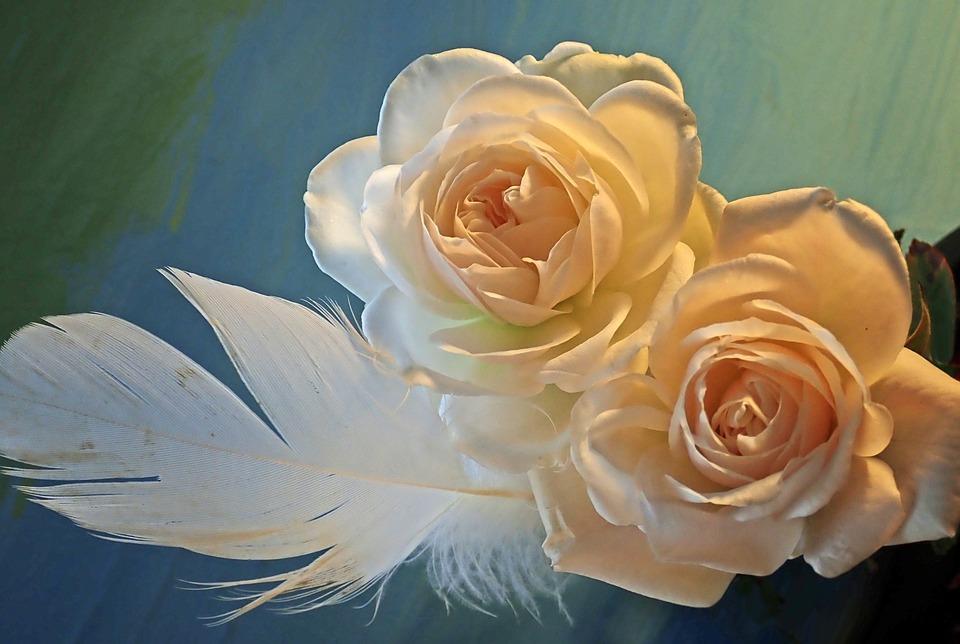 Flowers, Roses, Feather, Arrangement, Still Life