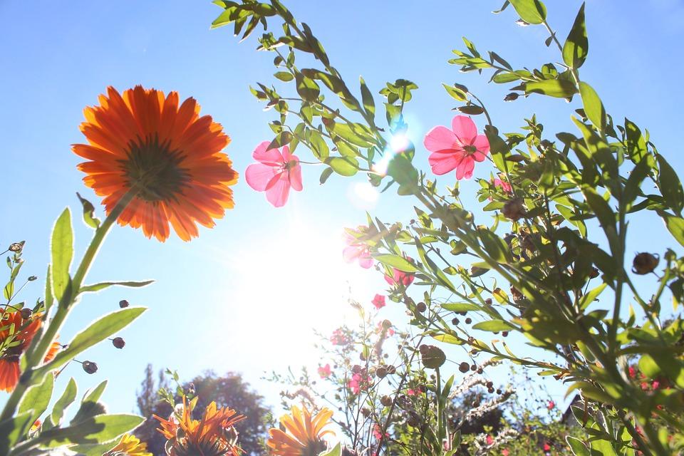 Flowers, Photographed From Below, Backlighting, Sunbeam