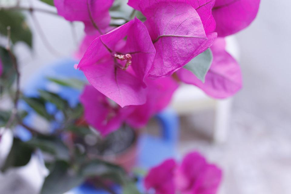Photography, Flowers, Beautiful Flowers, Flores