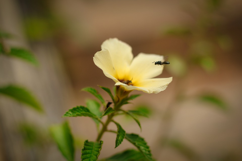 Flowers, Insects, Bee, Nature, Plants