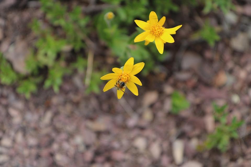 Flowers, Yellow, Bee