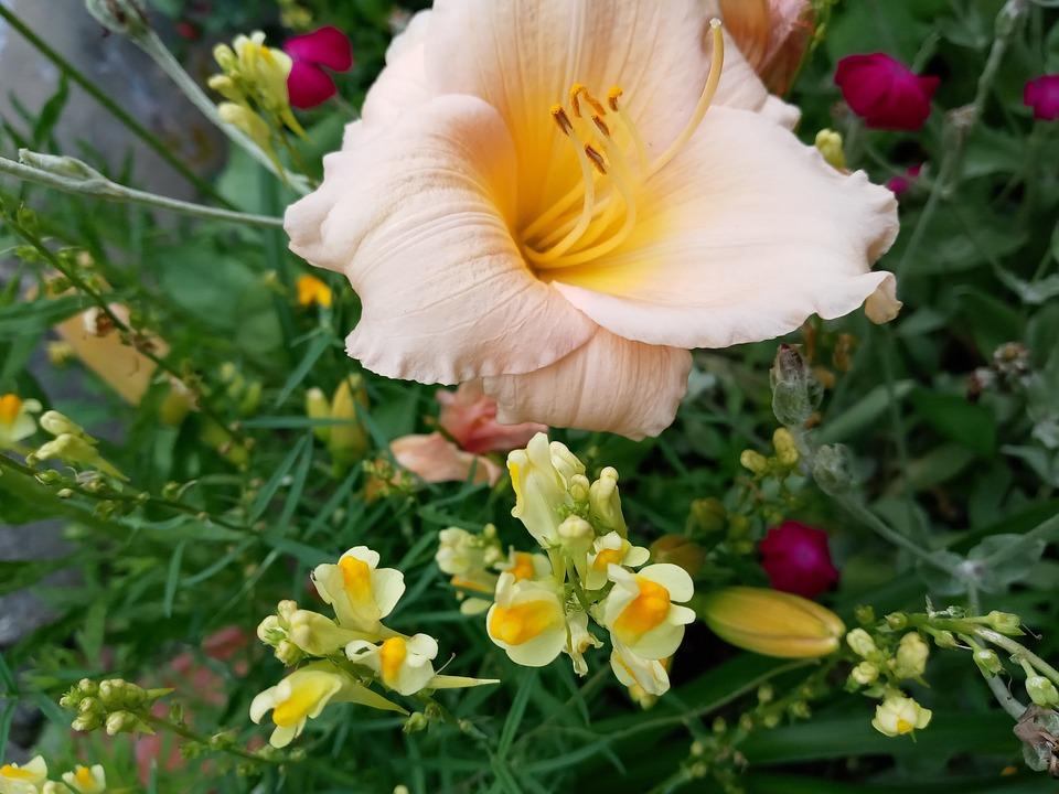 Herbarium, Gillyflower, Flowers, Petals, Bloom, Blossom