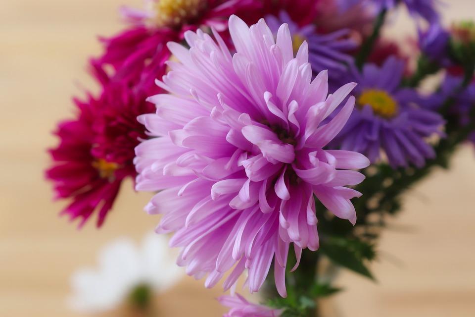 Flowers, Petals, Bloom, Blossom, Flora, Close Up