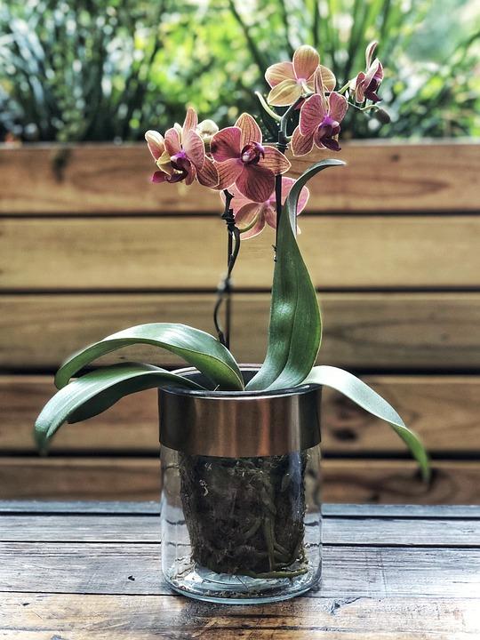 Vase, Flowers, Blossom, Flora, Bouquet, Pink, Bloom