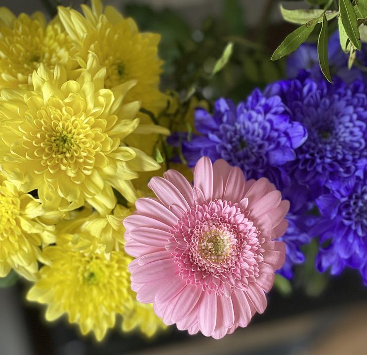 Chrysanthemum, Gerbera, Flowers, Petals, Bloom, Plant