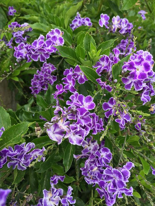 Flowers, Purple, Nature, Bloom, Plant, Garden, Summer