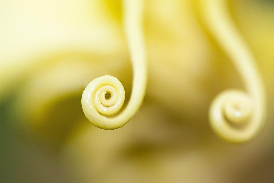 Free photo flowers bloom plant flower bell shaped yellow max pixel flower plant bell shaped flowers bloom yellow mightylinksfo