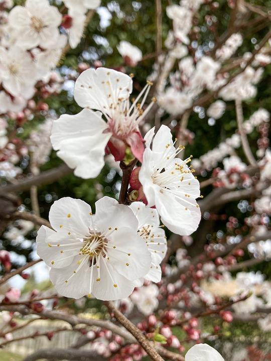 Flowers, Petals, Branch, Tree, Bloom, Blossom, Spring