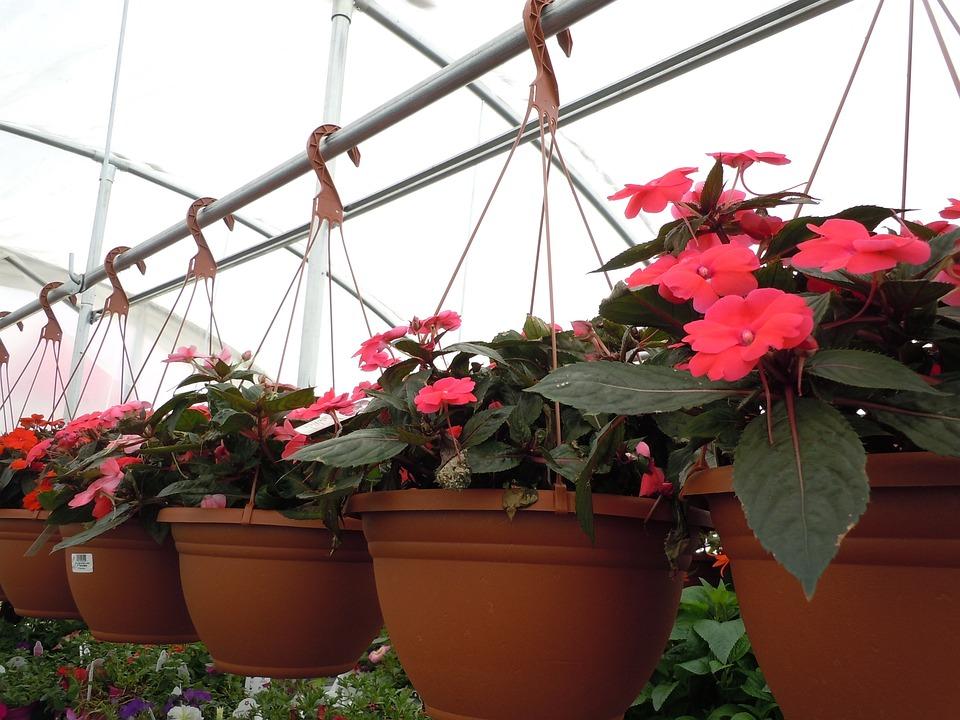 Flowers, Basket, Hanging, Floral, Blossom, Bloom