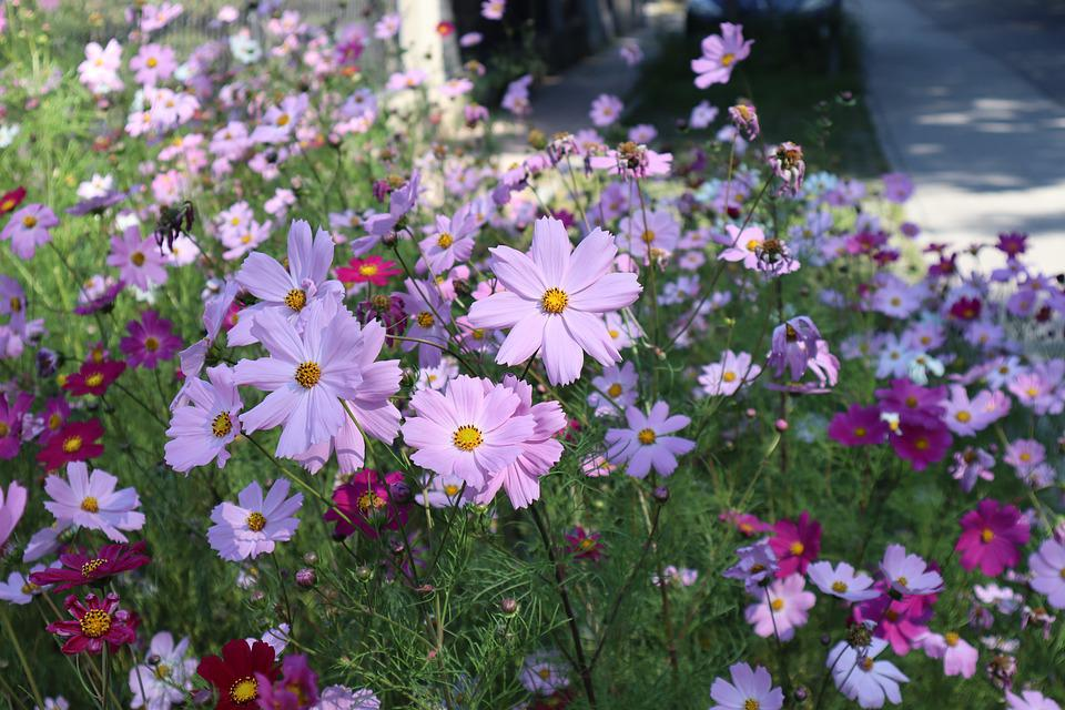 Flowers, Meadow, Nature, Bloom, Blossom, Botany, Petals