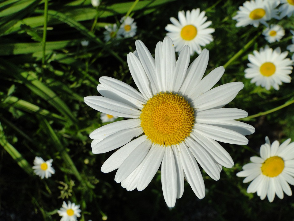 Flower, Blossom, Bloom, Flowers, White, Yellow