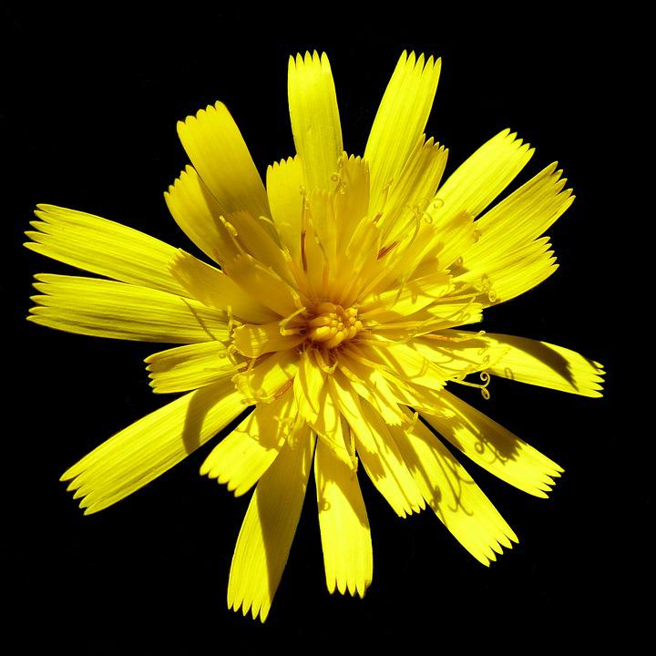 Flowers, Macro, Nature, Yellow, Petal, Blossomed