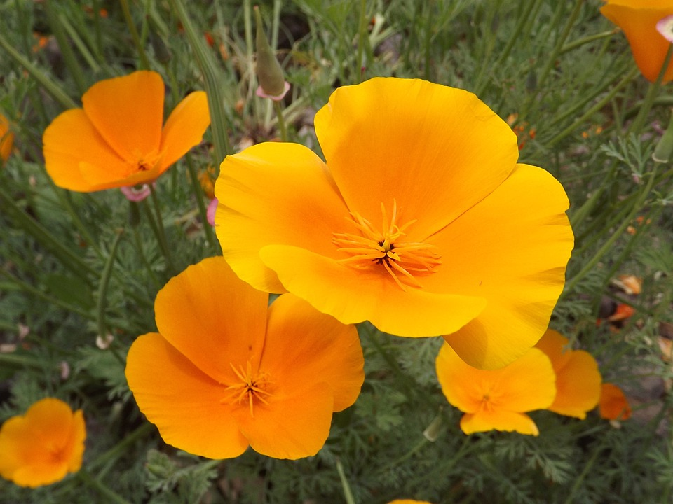 Flowers, Yellow Flower, Yellow Flowers, Plant, Blossoms
