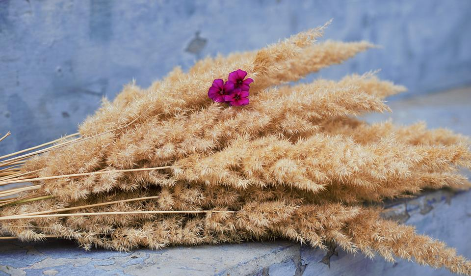 Flowers, Ciclamino, Bouquet, Beautiful, Blue