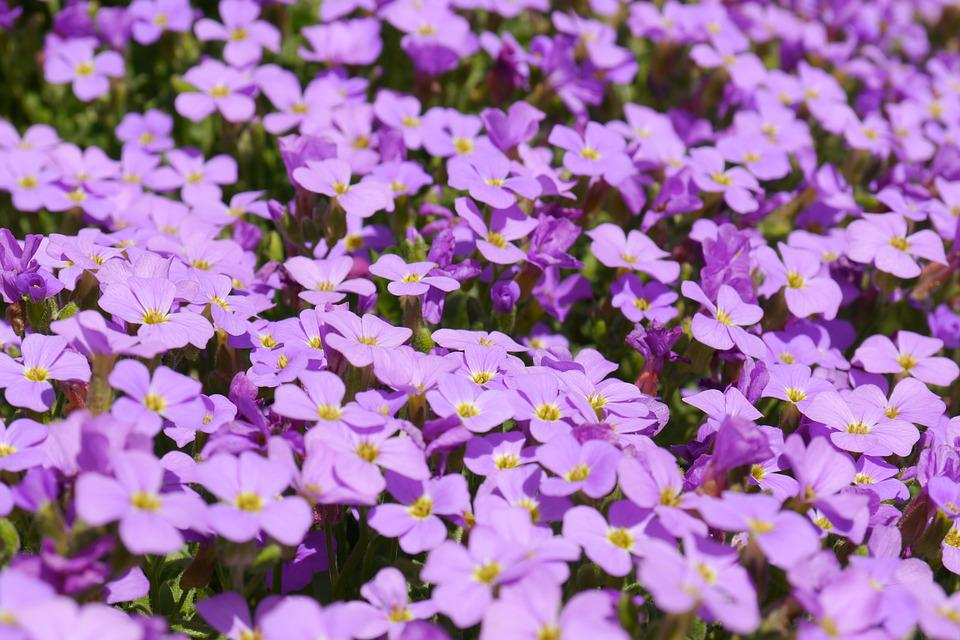 Blue Pillow, Flowers, Purple, Violet, Blossom, Bloom