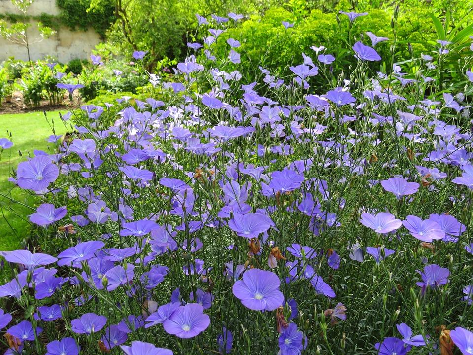 blue flowers garden english summer floral - English Garden Flowers