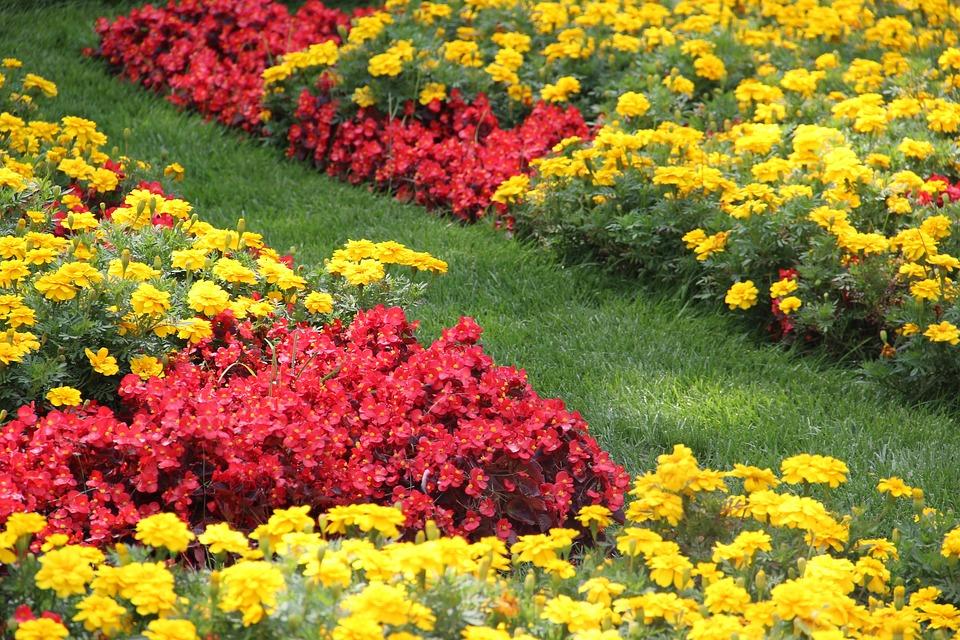 Flowers, Garden, Summer, Grass, Botany, Sunny