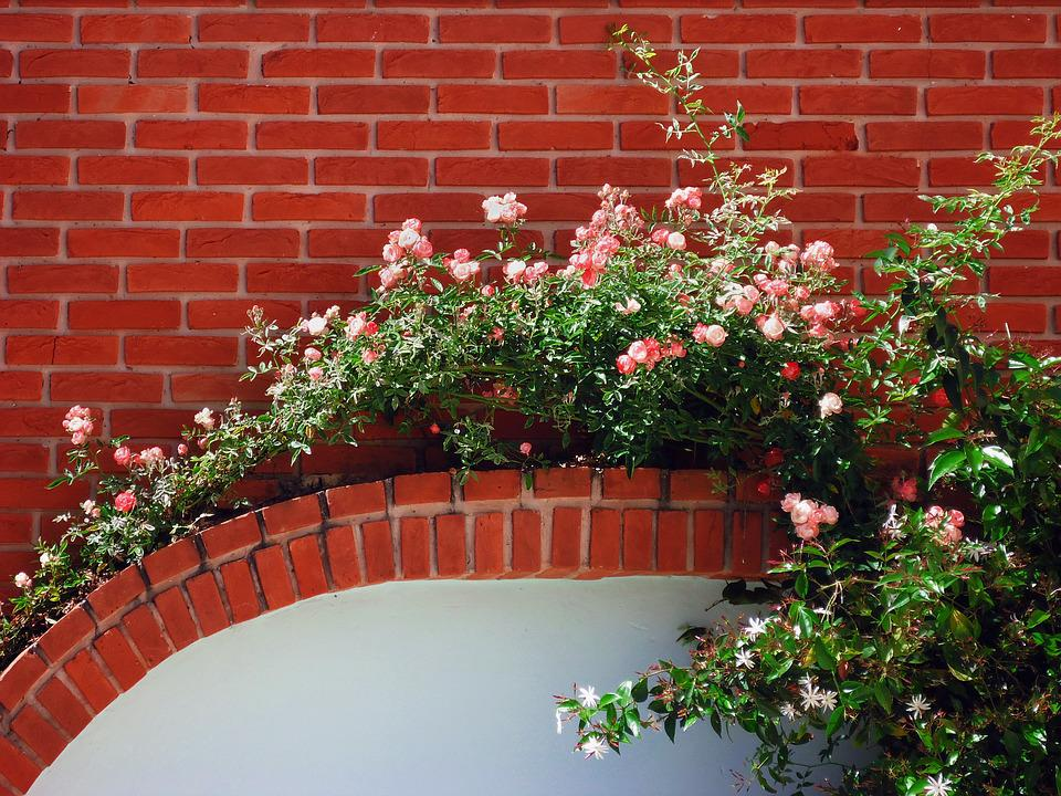 Flowers, Bricks, Roses, Bouquet, Creeper, Wall