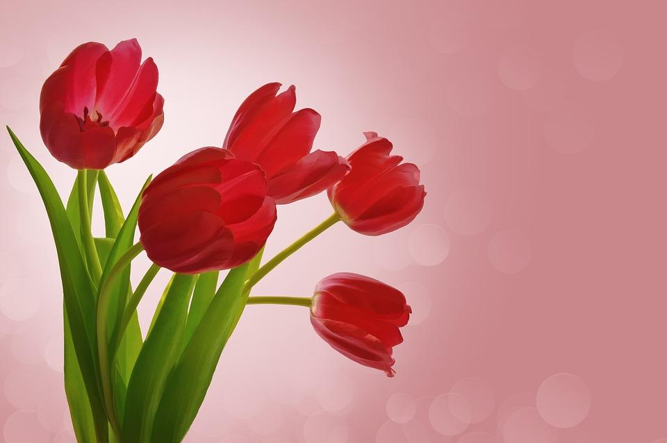 Flowers, Tulips, Valentine, Romance, Bouquet, Pink, Red