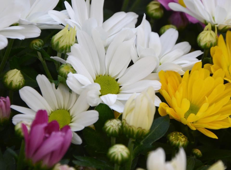 Free photo Flowers Bouquet White Flowers Yellow Flower Buds - Max Pixel
