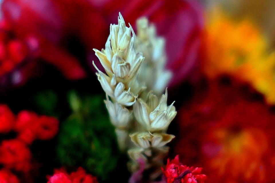 Dry Bouquet, Autumn, Flowers, Wreath, Deco, Bouquet