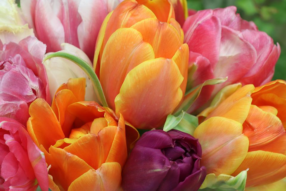 Tulips, Bright, Bouquet, Flowers, Flower, Romantic