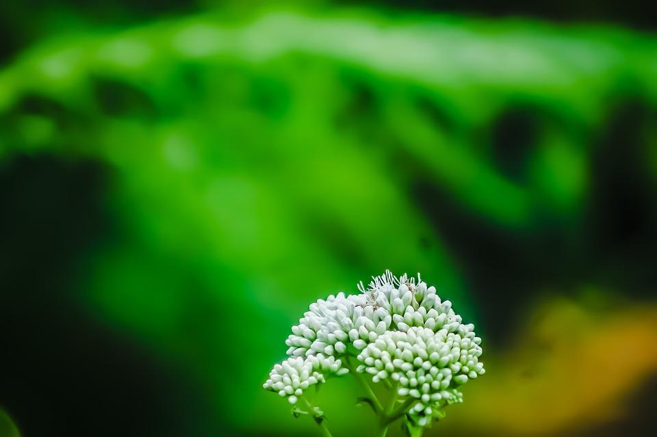 Flowers, Plants, Buds, Petals