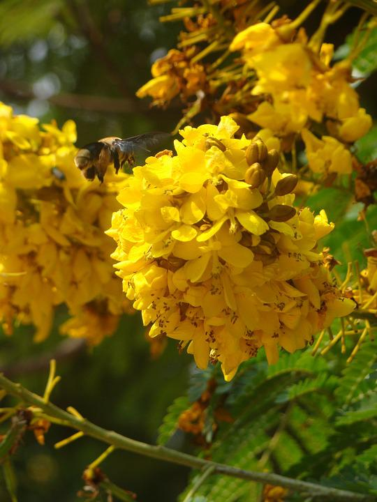 Bumblebee, Flowers, Tree