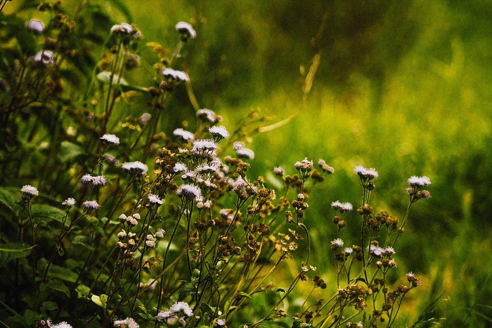 Flowers, Bush, Plants, Garden