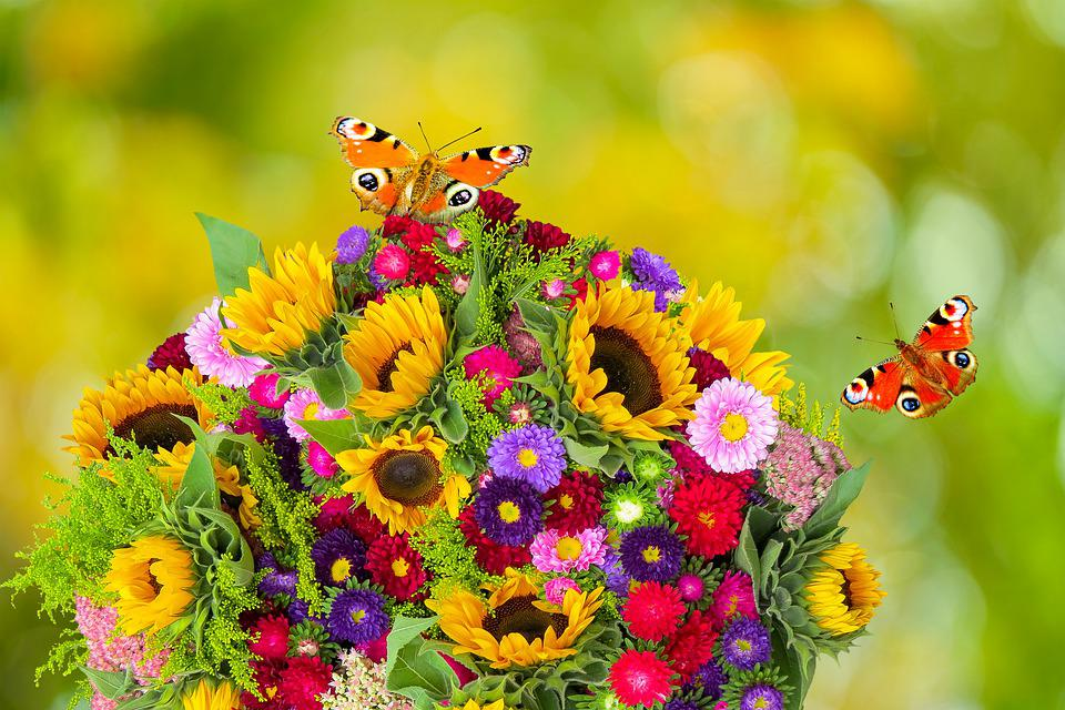 Flowers, Butterflies, Pollination, Background, Blossom