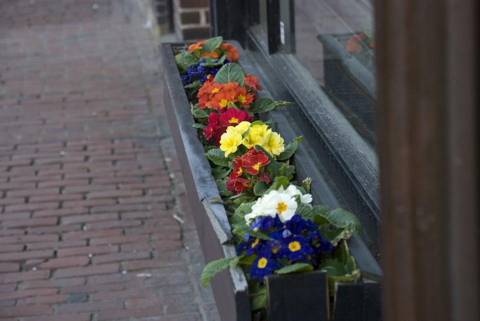 Boston Spring, Charles St, Flowers