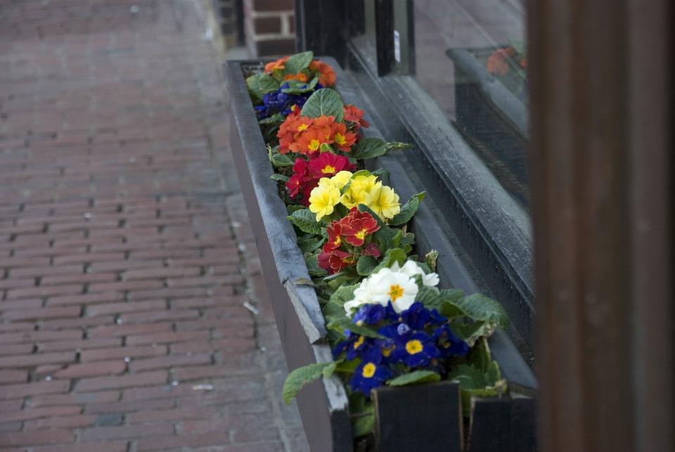 Boston Spring, Charles St, Flowers