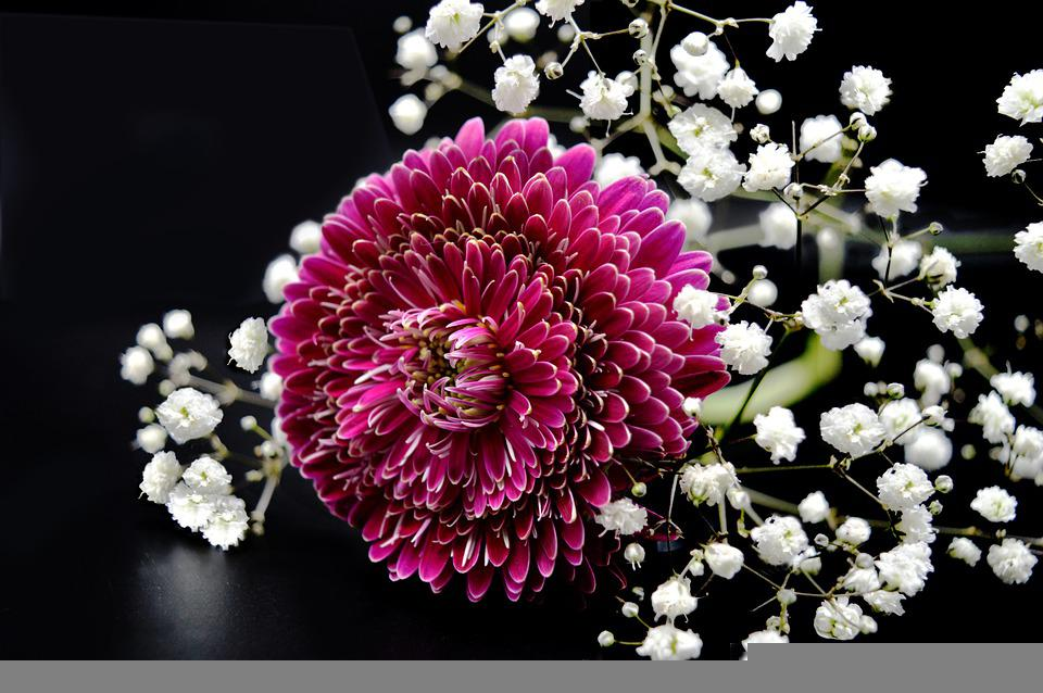 Chrysanthemum, Baby's Breath, Flowers