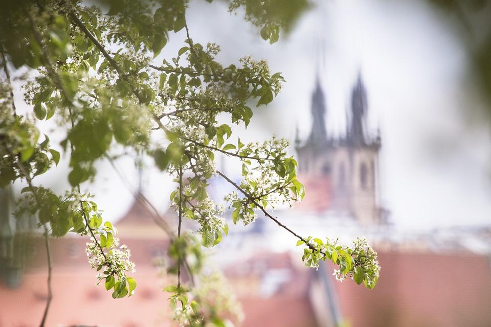 Spring, Flowers, City, Spring Blossoms, Spring Bloom