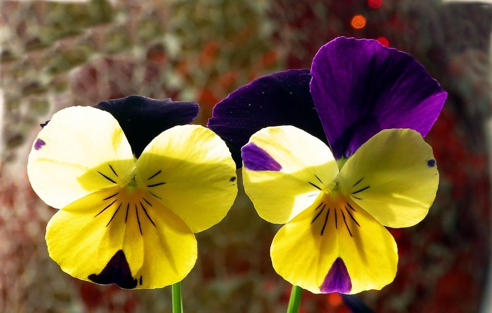 400–500, Spring, Close, Bi Color, Yellow, Flowers