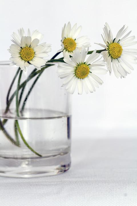 Flowers, Still Life, Daisy, Flower Vase, Close Up
