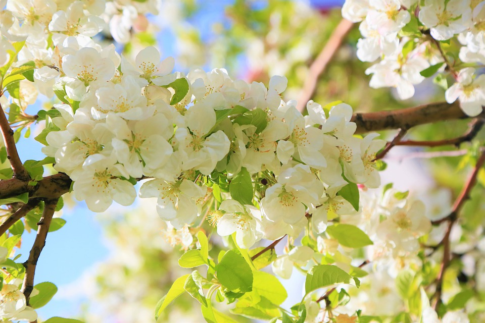 Flowers, Spring, Nature, Plant, Color, White, Beautiful