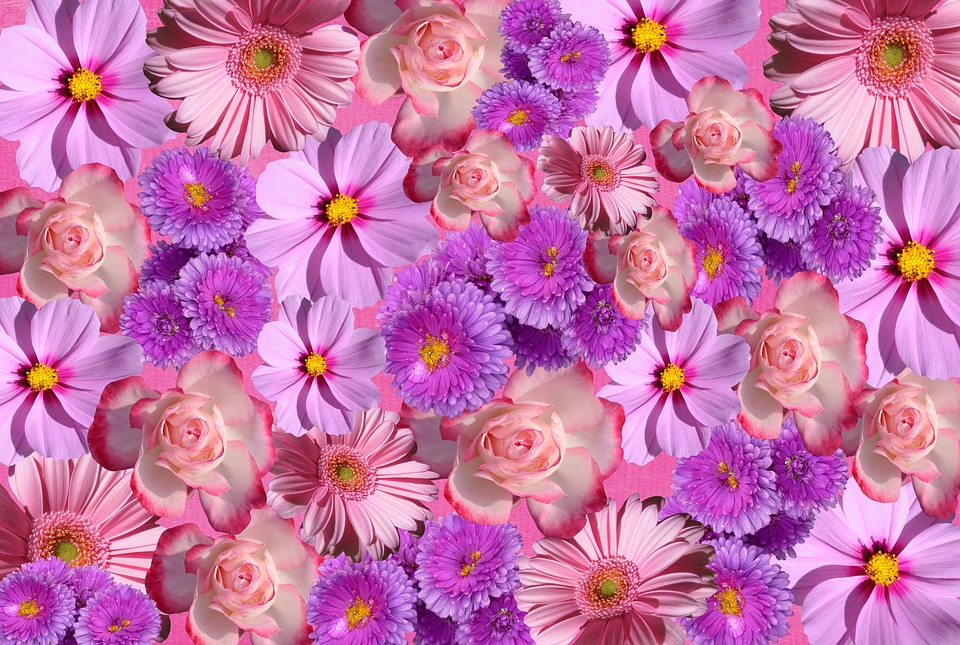 Flowers Blossom Bloom Nature Color Purple Pink