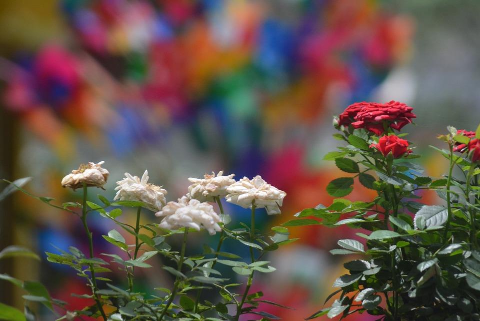 Landscape, Flowers, Colorful, Izmir, Flower Picture