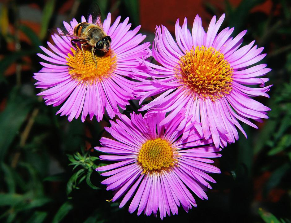 Flowers, Purple, Plant, Nature, Close, Insect, Colorful