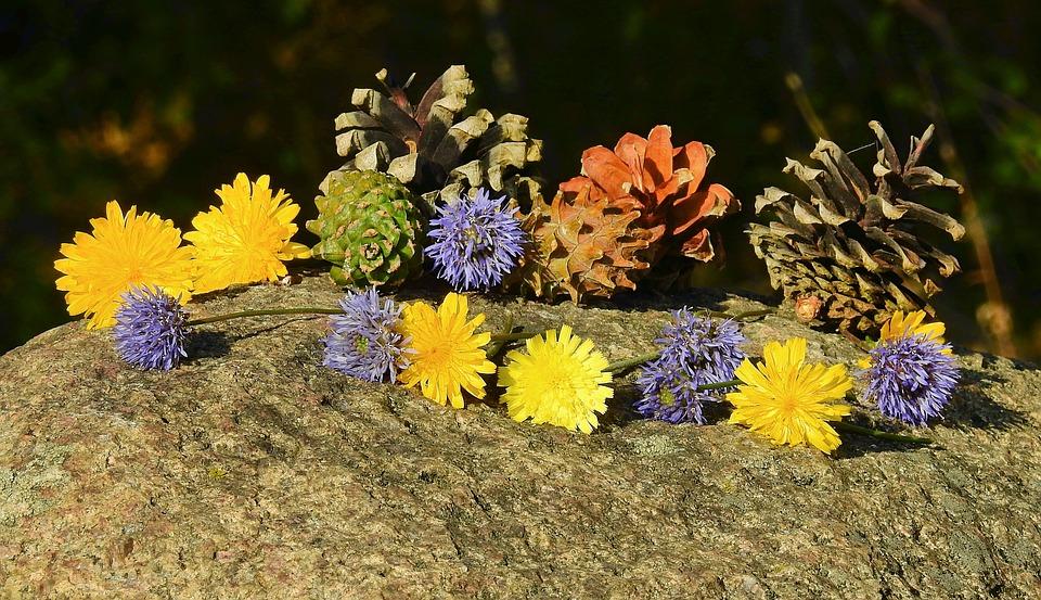 Flowers, Cones, Composition