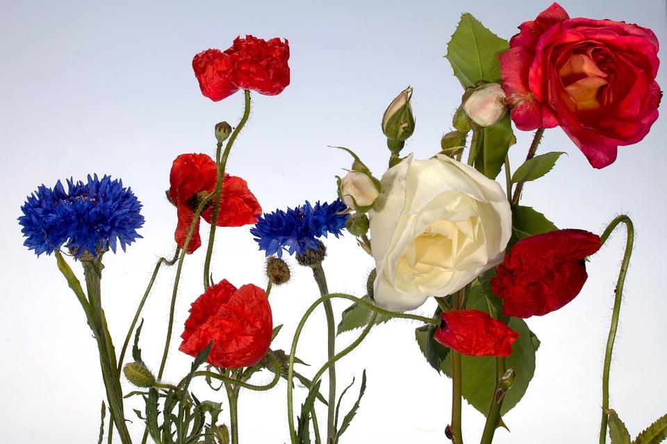 Flowers, Cornflowers, Roses, Summer, Poppies