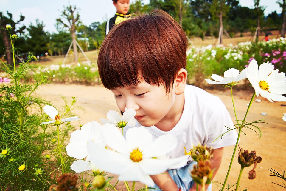 Boy, Odor, Baby, Cotton, Festival, Flowers, Nature, Fun