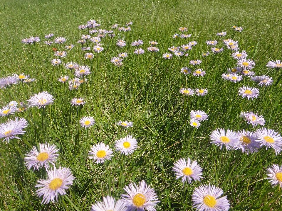 Flowers, Field, Prairie, Landscape, Open Field, Fields